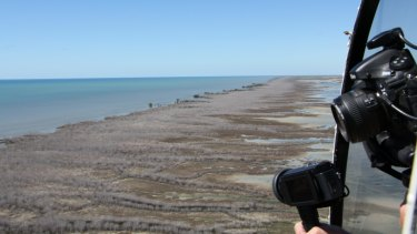Mangrove forests were wiped out along a 1000-kilometre stretch of the northern Australian coast in 2016.