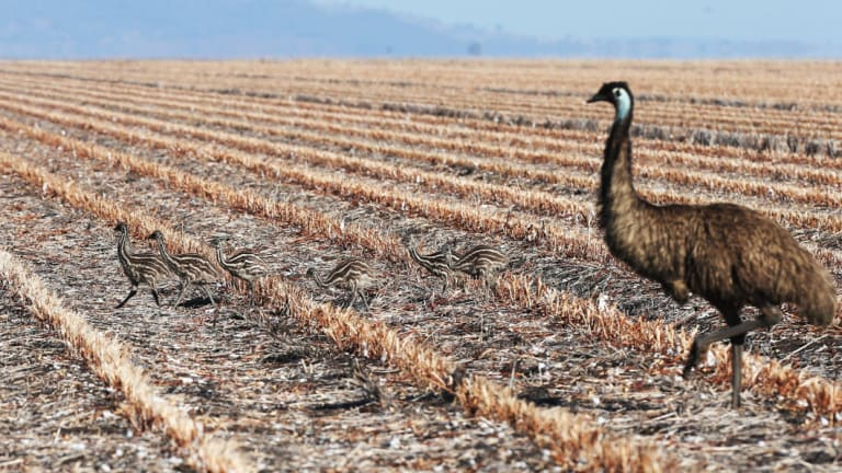 worst ever drought hits major agrigroup nufarm