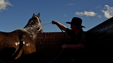 There is an eight-race card programmed for Wagga on Monday.