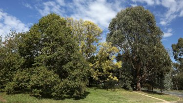 Canberra lost more than 10 per cent of its canopy cover between 2009 and 2016.