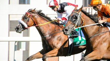 Almost Court, left, takes out the Canberra Cup in convincing fashion.