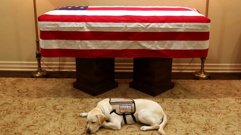 Sully, President George H.W. Bush's service dog, lies in front of his casket in Houston.