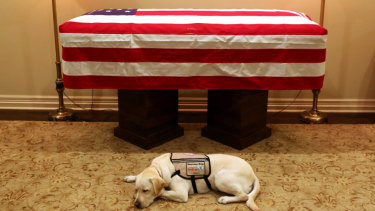 Sully, President George H.W. Bush's service dog, lies in front of his casket.