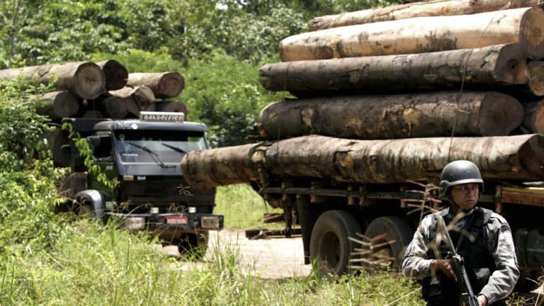 A soldier stands guard in front of a truck loaded with logs that were illegally cut from the Amazon rain forest.