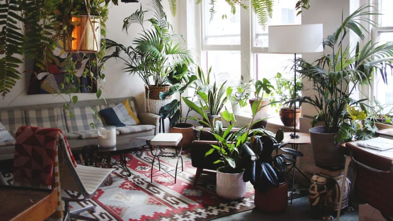 The popularity of The Jungle Collective's events reflects a growing demand for indoor plants which has swept through the Millennial mainstream in recent years.