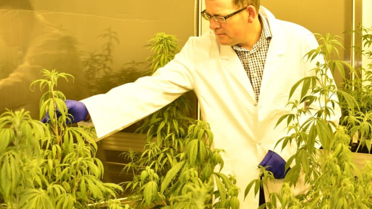 Medicinal cannabis will be dispensed to children in Victoria with severe epilepsy.