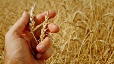 NAB is predicting a national wheat crop of 23.3 million tonnes.