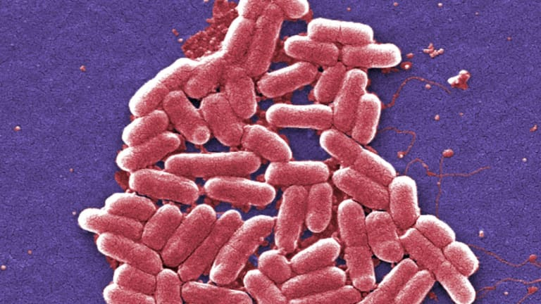 Superbugs, such as E.coli are resistant to many antibiotics