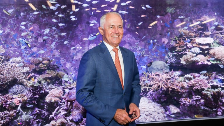 Australian Prime Minister Malcolm Turnbull at the Australian Institute of Marine Science where he announced a $60 million plan to save the Great Barrier Reef earlier this year.