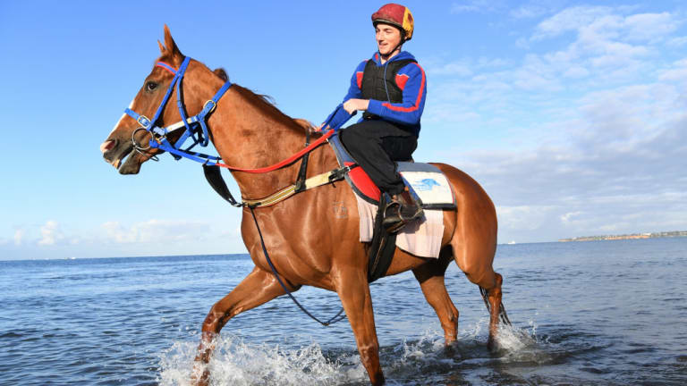 Single Gaze will start her preparation with Chris Waller in the group 2 Chelmsford Stakes.