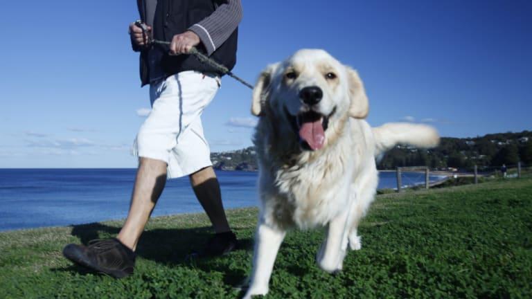 Pet ownership brings many benefits.