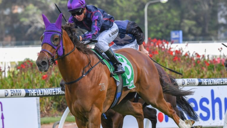 At his best:  Don't Give A Damn is set to fulfil his potential in The Kosciuszko at Randwick on Saturday.