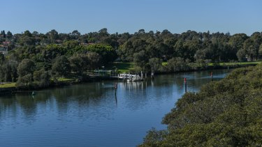 Saltwater mosquitoes flock to wetlands along the Parramatta River in summertime.