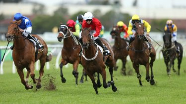 Eight races jump at Wyong on Wednesday.