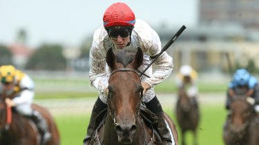 Class act: Talented mare Frolic is back in work for trainers Ed O'Rourke and Michael Freedman.