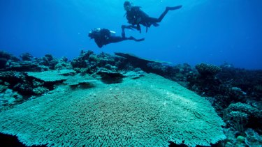 Research into coral reefs extends from studying how they cope with higher temperature to what happens when waters turn more acidic.
