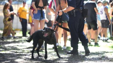 Police undertake searches at the Fieid Day Music Festival in Sydney on New Years Day.