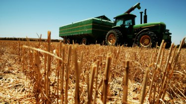 Lower wheat production will reduce Australia's wheat export capacity.