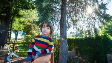 Arlo Wickerson, 4, in front of the large Cypress tree his parents applied to have cut down because they worried about falling branches.