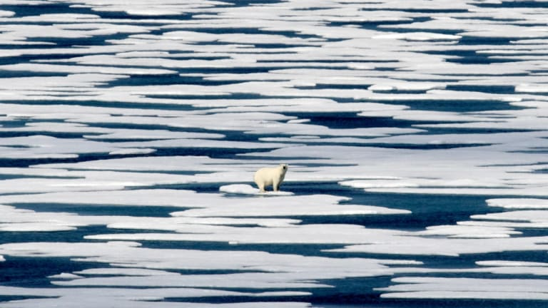 Global warming is melting the habitat of polar bears, which cannot survive without sea ice, using it to raise their young, to travel and as a platform for hunting seals - their primary food source.