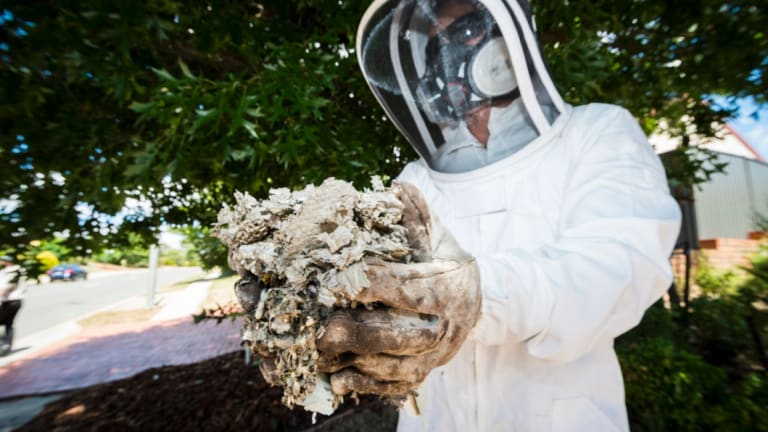 CoreEnviro Solutions senior pest and weed officer Jim Bariesheff removes a European wasp nest from a home in Palmerston, in January.