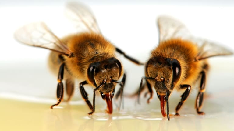 Researchers say high-tech solutions could help honey farmers and biologists find out more about bees.