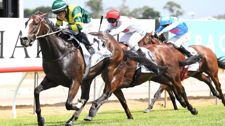Kusciuszko favourite:  Care To Think wins Magic Millions Cup.