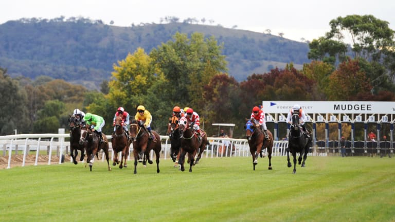 Big day out: the Mudgee Cup is the feature on an eight-race card.