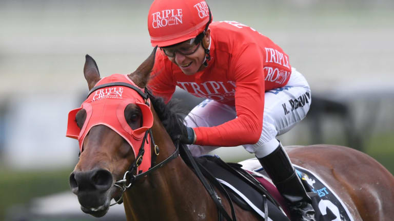 Red alert: All eyes will be on Winx but Redzel continues towards his Everest defence in The Shorts.