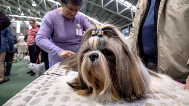 Dogs Victoria Rare Breeds Show in Skye.