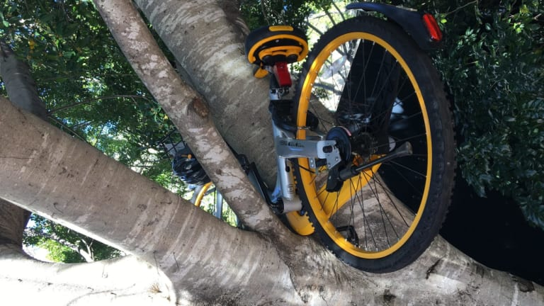 Dumped share bikes have clogged public spaces across the city.