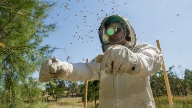 CoreEnviro Solutions senior pest and weed officer Jim Bariesheff inspects a European Wasp nest in Evatt.