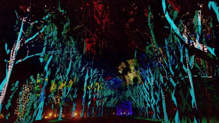 Boorna Waanginy: The Trees Speak.