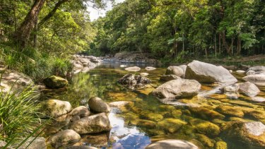 Scientists hope to protect plants at Mt Lewis, near Mossman in far north Queensland.