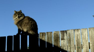 Police investigated over 400 cases of cats being dismembered and left in owners' yard.
