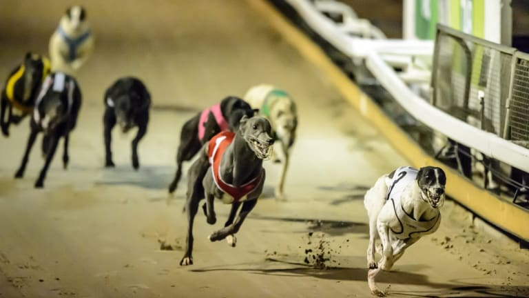 The Canberra Greyhound Racing Club lost an appeal seeking to force the ACT Planning and Land Authority to grant it a new lease over its Symonston premises.