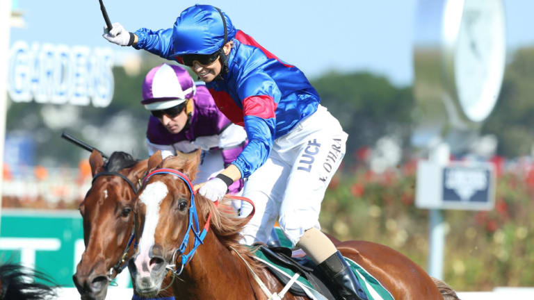 Former Single Gaze owner Martin Hay hopes Chris Waller uses jockey Kathy O'Hara if the mare races again.