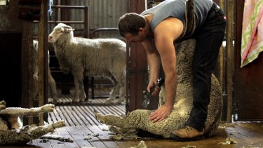 Production manufacturing wool recovery