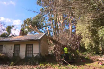 Trees fell again in the Dandenongs in Tuesday's strong winds.
