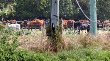Horses at the Meramist Abattoir on Friday.