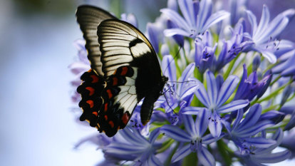 Here's what you can plant now to keep those pollinators calling