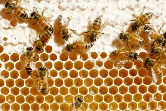 "The New Zealand government is supporting a group of domestic honey producers seeking to register the term ""manuka honey"" as a certification trademark in China."