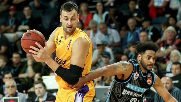 Popular attraction: Andrew Bogut has helped bring the crowds to the Kings this season.