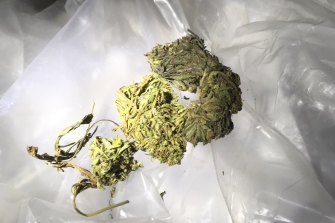 "A file photo showing marijuana seized by police. The case in ""BMJ Case Reports"" was the first reported ""prison-acquired marijuana-based rhinolith"" in the world, the clinicians wrote."