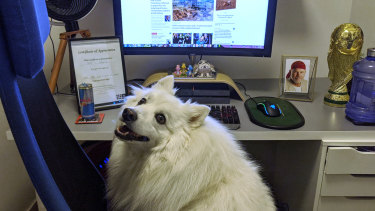 Link the dog at Matt Bungard's work station at home.