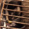 Chinese authorities' latest wildlife trade outrage is mindbogglingly reckless
