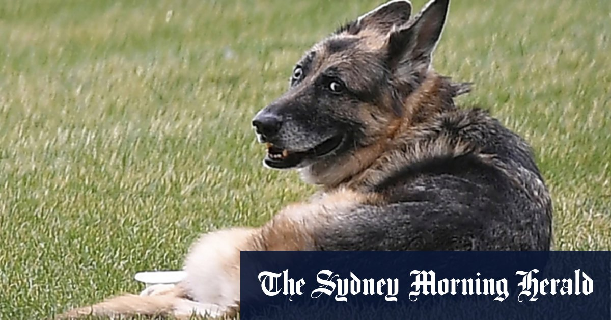 Bidens announce death of 'first dog' Champ – Sydney Morning Herald