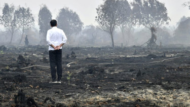 Joko Widodo travelled to the area hardest hit by forest fires, as neighbouring countries urged his government to do more to tackle the blazes that have spread a thick, noxious haze around Southeast Asia.