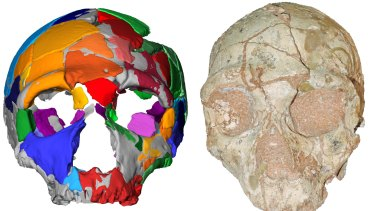 The computer reconstruction of Apidima 2, which has been confirmed as a Neanderthal skull.