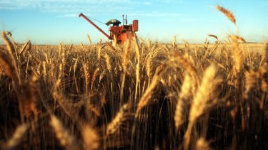 Australian wheat could be targeted by China's customs.